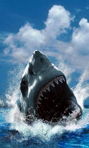 Klicken Sie auf die Grafik für eine größere Ansicht  Name:Shark.jpg Hits:667 Größe:115,9 KB ID:16372