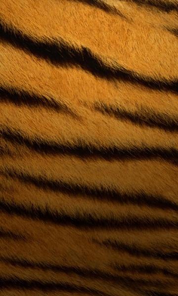 Klicken Sie auf die Grafik für eine größere Ansicht  Name:Tiger.jpg Hits:383 Größe:148,6 KB ID:16373