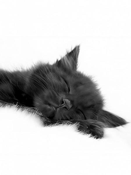 Klicken Sie auf die Grafik für eine größere Ansicht  Name:sleep Cat.jpg Hits:235 Größe:41,4 KB ID:16504