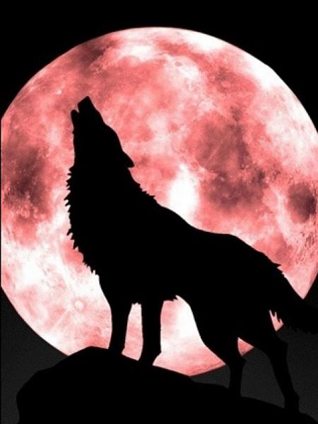 Klicken Sie auf die Grafik für eine größere Ansicht  Name:Wolf.jpg Hits:1084 Größe:73,1 KB ID:16508