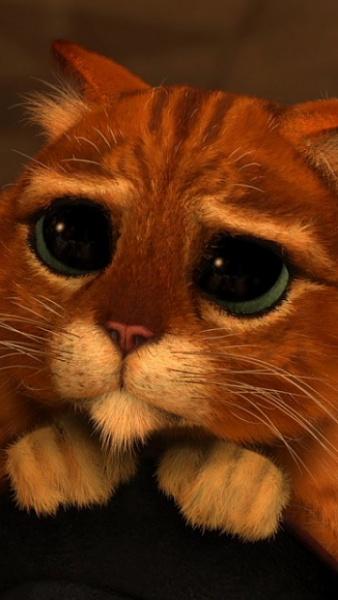 Klicken Sie auf die Grafik für eine größere Ansicht  Name:Sweet Cat.jpg Hits:813 Größe:70,6 KB ID:17236