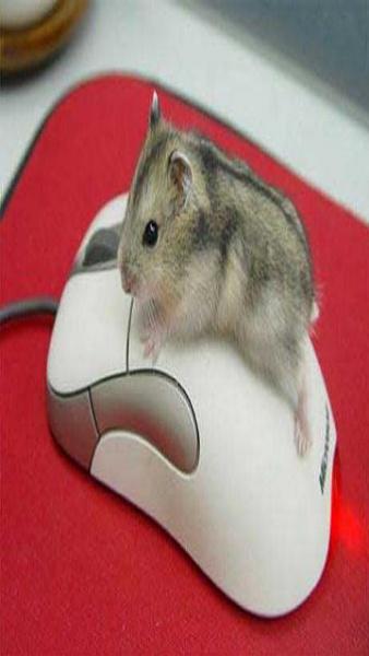 Klicken Sie auf die Grafik für eine größere Ansicht  Name:Mouse.jpg Hits:374 Größe:31,7 KB ID:17252