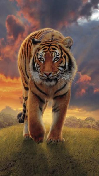 Klicken Sie auf die Grafik für eine größere Ansicht  Name:Tiger.jpg Hits:479 Größe:39,5 KB ID:17255