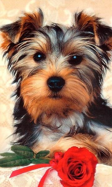 Klicken Sie auf die Grafik für eine größere Ansicht  Name:Sweetdog.jpg Hits:436 Größe:160,7 KB ID:18218