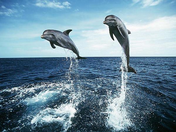 Klicken Sie auf die Grafik für eine größere Ansicht  Name:Delfine.jpg Hits:2741 Größe:233,8 KB ID:18622
