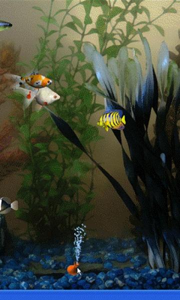 Klicken Sie auf die Grafik für eine größere Ansicht  Name:Aquarium.jpg Hits:1019 Größe:170,2 KB ID:19069