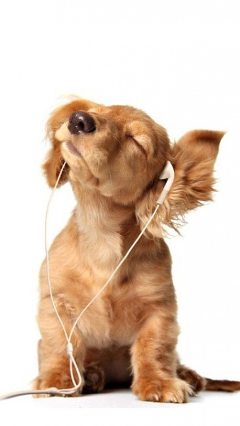 Klicken Sie auf die Grafik für eine größere Ansicht  Name:Music_Dog.jpg Hits:438 Größe:33,7 KB ID:19152