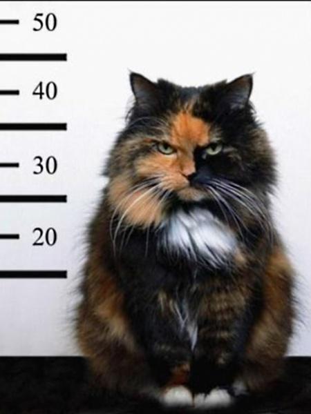 Klicken Sie auf die Grafik für eine größere Ansicht  Name:Bad_Cat.jpg Hits:245 Größe:64,5 KB ID:19225