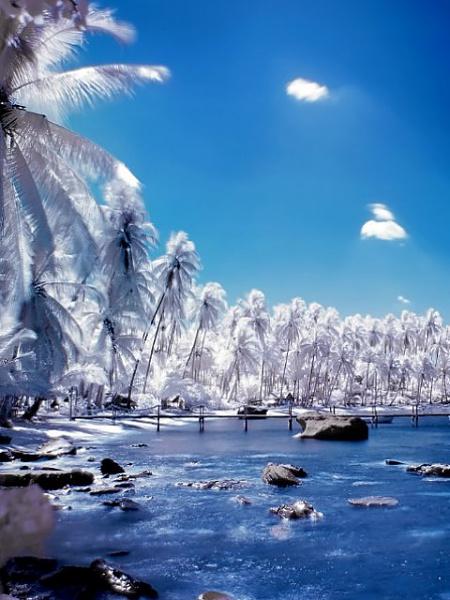 Klicken Sie auf die Grafik für eine größere Ansicht  Name:White_Palm_Trees.jpg Hits:195 Größe:64,6 KB ID:19231