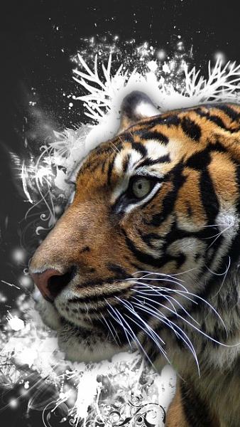 Klicken Sie auf die Grafik für eine größere Ansicht  Name:Abstrakt Tiger.jpg Hits:748 Größe:121,2 KB ID:19364