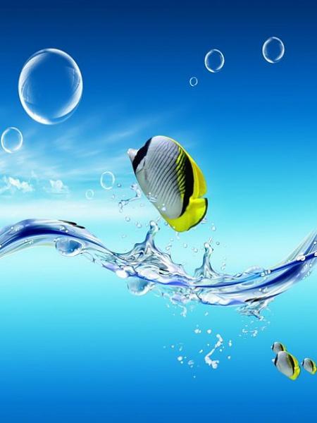 Klicken Sie auf die Grafik für eine größere Ansicht  Name:Fish.jpg Hits:455 Größe:37,6 KB ID:20504