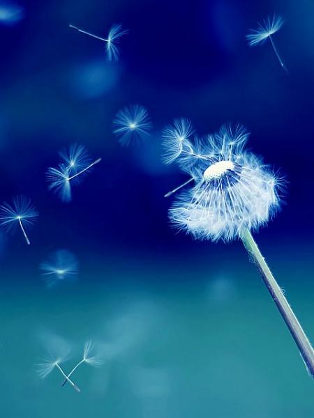 Klicken Sie auf die Grafik für eine größere Ansicht  Name:Flower.jpg Hits:290 Größe:32,0 KB ID:20505