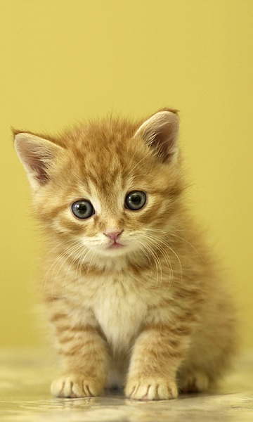 Klicken Sie auf die Grafik für eine größere Ansicht  Name:Kitten.jpg Hits:1242 Größe:161,4 KB ID:20724