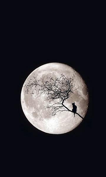 Klicken Sie auf die Grafik für eine größere Ansicht  Name:Moon.jpg Hits:301 Größe:44,7 KB ID:20725