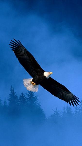 Klicken Sie auf die Grafik für eine größere Ansicht  Name:Adler.jpg Hits:439 Größe:47,3 KB ID:22314