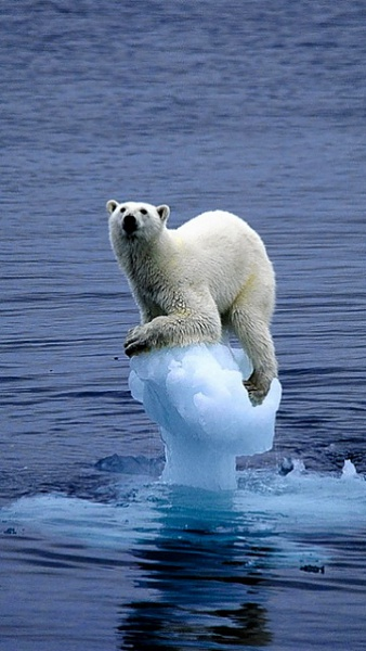 Klicken Sie auf die Grafik für eine größere Ansicht  Name:Eisbär.jpg Hits:1075 Größe:87,2 KB ID:22317