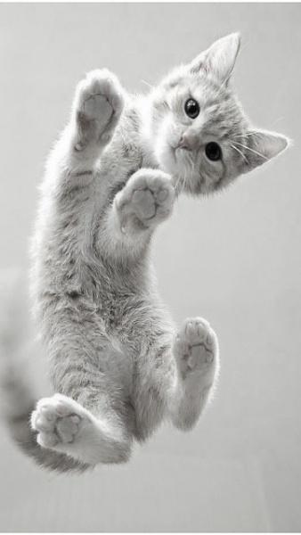 Klicken Sie auf die Grafik für eine größere Ansicht  Name:Katze.jpg Hits:515 Größe:36,1 KB ID:22318