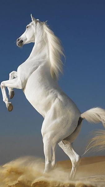 Klicken Sie auf die Grafik für eine größere Ansicht  Name:Pferd.jpg Hits:662 Größe:50,4 KB ID:22321