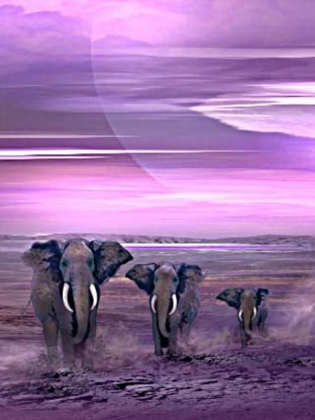 Klicken Sie auf die Grafik für eine größere Ansicht  Name:Elephants.jpg Hits:192 Größe:87,8 KB ID:23165