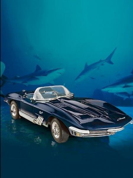Klicken Sie auf die Grafik für eine größere Ansicht  Name:Shark Car.jpg Hits:224 Größe:61,6 KB ID:24157