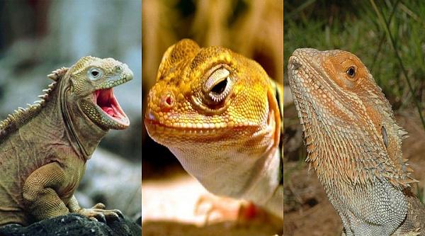 Klicken Sie auf die Grafik für eine größere Ansicht  Name:Reptilien.jpg Hits:845 Größe:97,5 KB ID:27431
