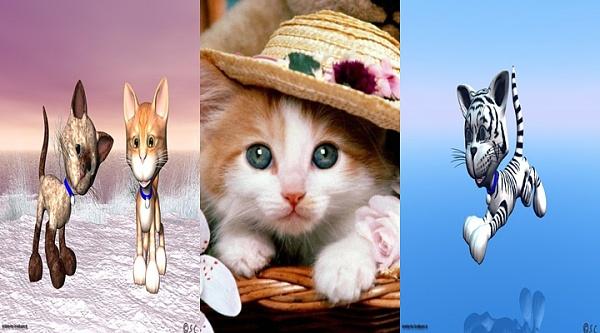 Klicken Sie auf die Grafik für eine größere Ansicht  Name:winter-cats-1024-horz.jpg Hits:1252 Größe:183,3 KB ID:30846