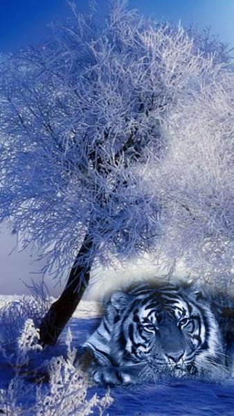 Klicken Sie auf die Grafik für eine größere Ansicht  Name:Winter Logos [A4P] (2).jpg Hits:359 Größe:116,1 KB ID:32557