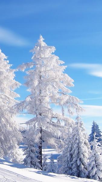 Klicken Sie auf die Grafik für eine größere Ansicht  Name:Winter Logos [A4P] (5).jpg Hits:301 Größe:88,0 KB ID:32558