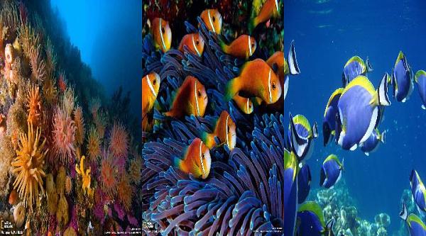Klicken Sie auf die Grafik für eine größere Ansicht  Name:Unter Wasser.jpg Hits:1986 Größe:67,9 KB ID:34729