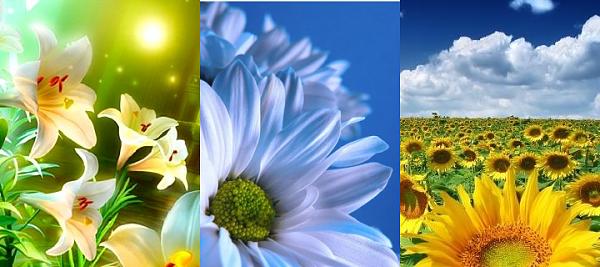 Klicken Sie auf die Grafik für eine größere Ansicht  Name:Blumen.png Hits:1776 Größe:622,9 KB ID:35386