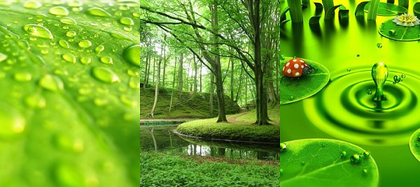 Klicken Sie auf die Grafik für eine größere Ansicht  Name:Green.png Hits:1524 Größe:649,5 KB ID:35387