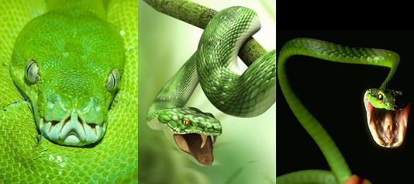 Klicken Sie auf die Grafik für eine größere Ansicht  Name:Snake.png Hits:1793 Größe:523,4 KB ID:35394