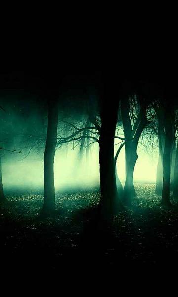Klicken Sie auf die Grafik für eine größere Ansicht  Name:Night_Forest.jpg Hits:703 Größe:15,8 KB ID:35740