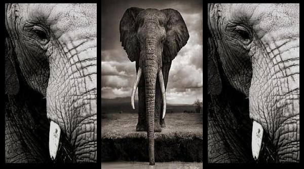 Klicken Sie auf die Grafik für eine größere Ansicht  Name:Elefanten Logo (1).jpg Hits:2031 Größe:55,7 KB ID:35795