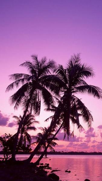 Klicken Sie auf die Grafik für eine größere Ansicht  Name:Sony Ericsson Vivaz Hindergrundbilder (15).jpg Hits:451 Größe:100,3 KB ID:36639