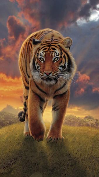 Klicken Sie auf die Grafik für eine größere Ansicht  Name:Tier Wallpaper (10).jpg Hits:485 Größe:105,7 KB ID:38533