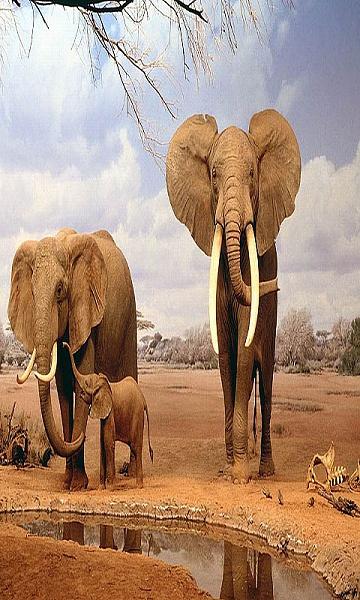 Klicken Sie auf die Grafik für eine größere Ansicht  Name:elephantfamily.jpg Hits:620 Größe:128,0 KB ID:43113