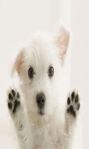 Klicken Sie auf die Grafik für eine größere Ansicht  Name:samsung-wave-white-dog.jpg Hits:482 Größe:38,3 KB ID:43175