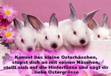 Oster MMS-Bilder (3).jpg