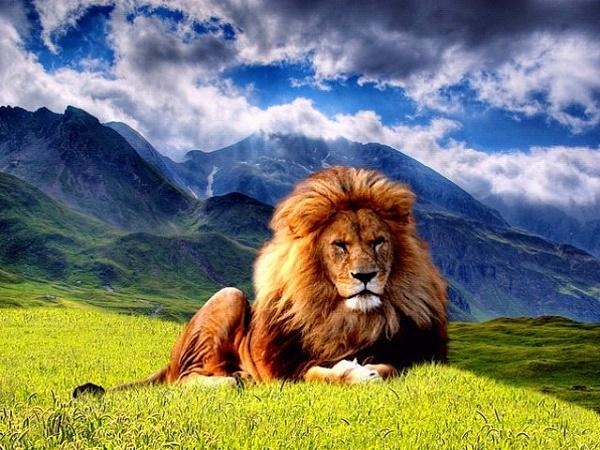 Klicken Sie auf die Grafik für eine größere Ansicht  Name:Tier Hintergrund (9).jpg Hits:186108 Größe:151,0 KB ID:49394