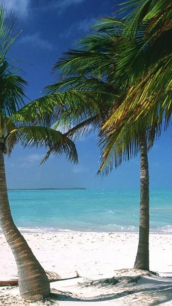 Klicken Sie auf die Grafik für eine größere Ansicht  Name:islands-palm-trees-caribbean-Bahamas.jpg Hits:749 Größe:369,9 KB ID:51439