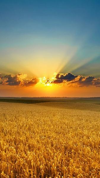Klicken Sie auf die Grafik für eine größere Ansicht  Name:golden-sommer-field-wallpaper-2015.jpg Hits:1844 Größe:66,2 KB ID:51538