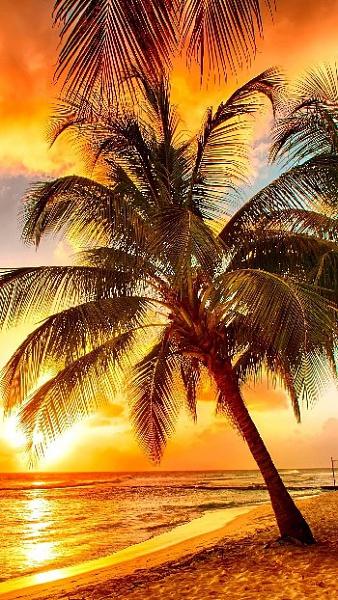 Klicken Sie auf die Grafik für eine größere Ansicht  Name:sonnenuntergang-palme-sonne-strand-meer.jpg Hits:5706 Größe:118,6 KB ID:51543