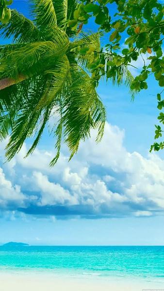 Klicken Sie auf die Grafik für eine größere Ansicht  Name:Tropical-Beach-Coconut-Tree.jpg Hits:734 Größe:83,3 KB ID:51544