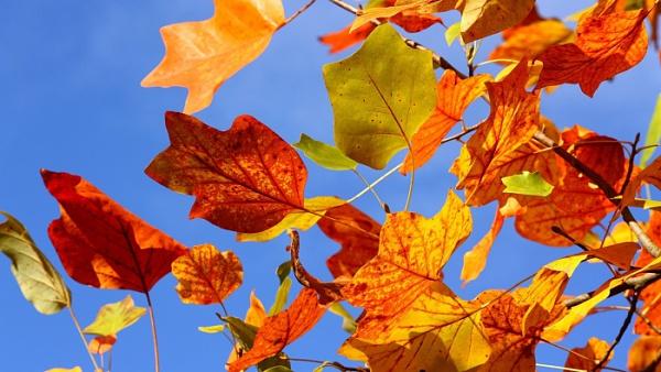 Herbstanfang 2015: 12 schöne Herbst Wallpaper/Hintergrundbilder für das iPhone 6/6s